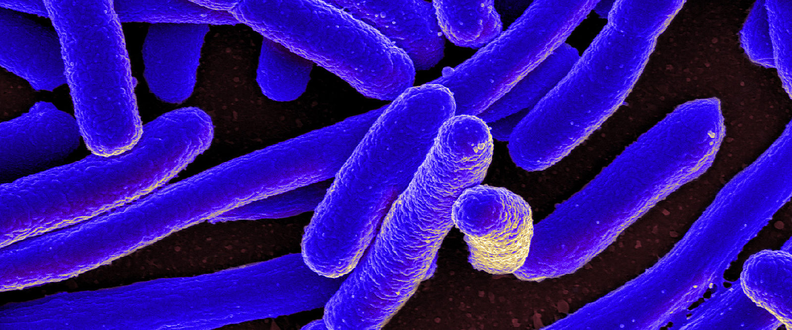 E. coli for Golden Gate cloning and assembly header